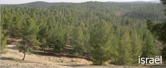 La forêt en Israël